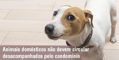 Animais não devem circular desacompanhados