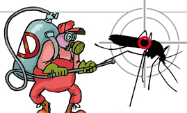 Chegada do verão aciona alarme contra mosquito Aedes Agypti