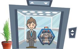 Transporte de PETs no elevador exige cuidados