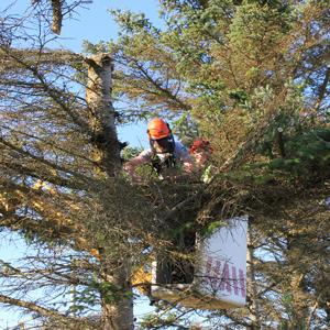 Poda de árvores deve obedecer a regras internas e externas ao condomínio