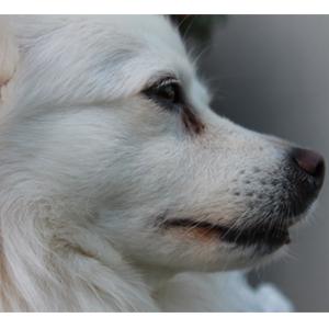 Cães muito barulhentos podem vir a ser banidos do condomínio