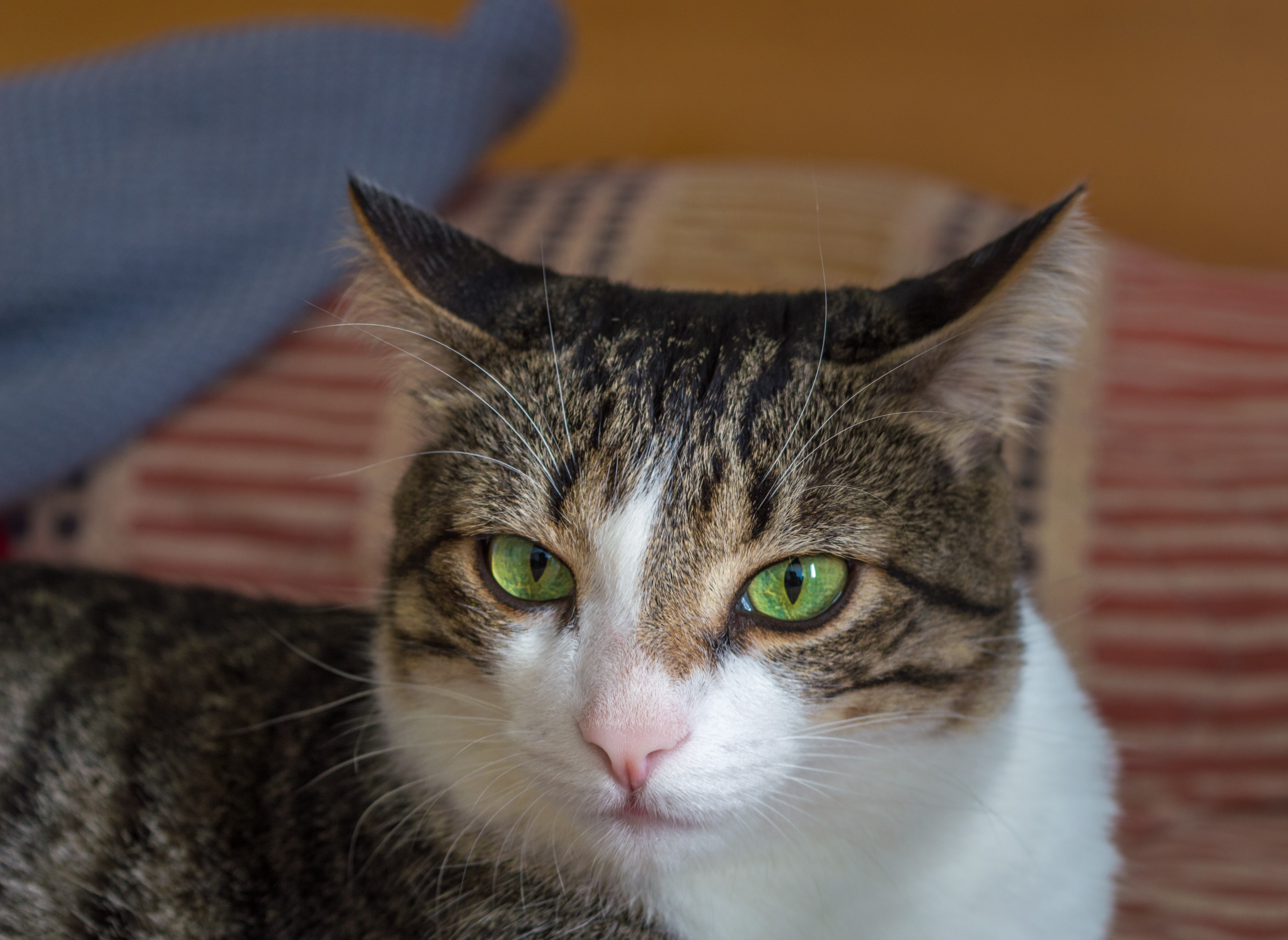 Justiça limita número de gatos por apartamento