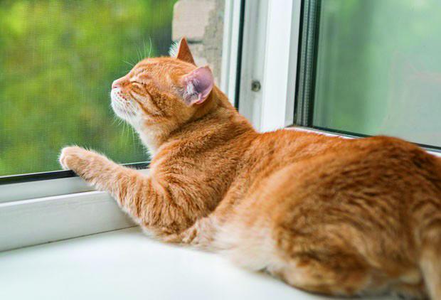 História de hoje: Os pets da vizinhança – Gatos