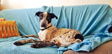 Adestramento é alternativa para lidar com cães em condomínio