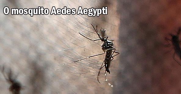 Destaque_Capa_mosquito