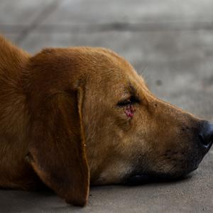 Projeto obriga síndico a denunciar maus-tratos a animais